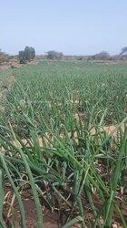 Terrains agricoles 20 ha - Sénégal