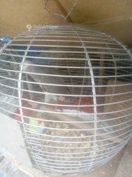 Perroquet parleur