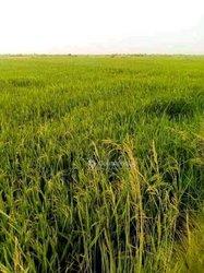 Terrain agricole 15 ha