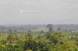 Terrains agricoles 200000 m2 - Yamoussoukro