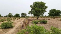 Terrain agricoles - 4 ha - Koubri