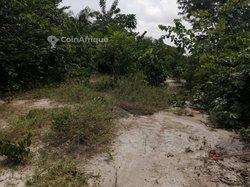 Terrains agricoles 300 ha - Agboville