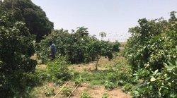 Verger  2 hectares - Keur Séga