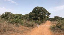 Verger  5 hectares -  Gap