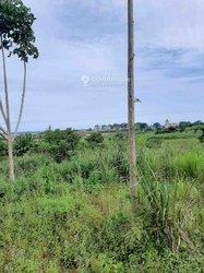 Terrains agricoles 10000 m2 - Cocody