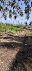 Terrains agricoles - Bingervilla Elokaté