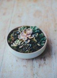 Plantes d'extérieur - d'intérieur