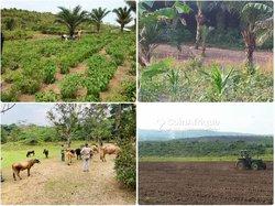 Terrain agricole - Kinshasa