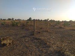 Terrains agricoles - Mbacke Baol