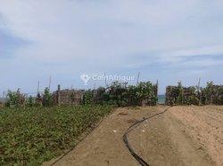 Terrains agricoles - Baguida Plage