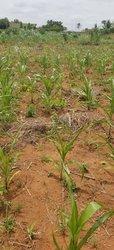 Terrains agricoles - Adétikopé