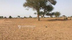 Terrain agricole 1,29 ha - Thiénaba khabane