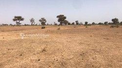Terrain agricole 1 ha - Thiénaba khabane