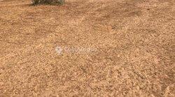 Terrain agricole 1,11 ha - Keur siny