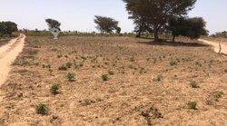 Verger agricole 1,22 ha - Keur Sara Badiane