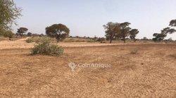 Terrain agricole  5 hectares - Keur Siny