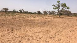 Terrain agricole  1 hectare - Keur Siny