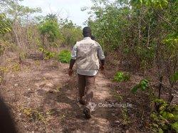 Vente Terrain 40 hectares - Tanènè