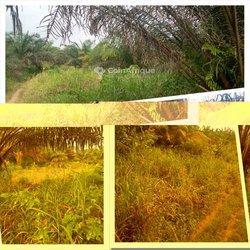 Terrains agricoles 56 ha - Agboville