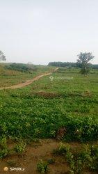 Terrains agricoles - Dabou - Songon