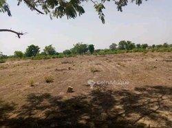 Terrain agricole 3 ha - Saaba
