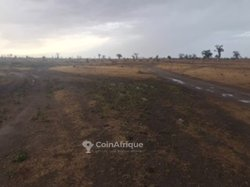 Terrains agricoles 6 ha - Mbodiene
