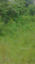 Vente forêt 15 ha -  - Yakasséme