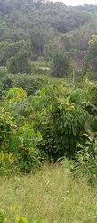 Terrains agricoles 20 ha - Songon