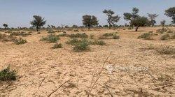 Terrains agricoles 7000  m2 - Thies