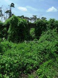 Terrains agricoles 1 ha - Soa