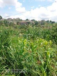 Terrain agricole - Yaoundé