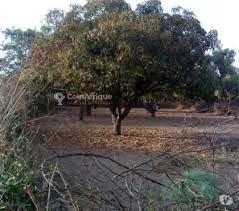 Terrains agricole