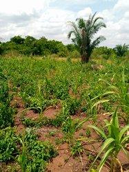 Terrains agricoles - Assommé Davié