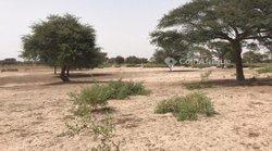 Terrain agricole 3021 m² - Keur Amary coumba