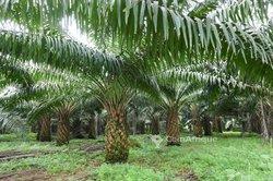 Vente Terrains agricoles 50 hectares - Plateau