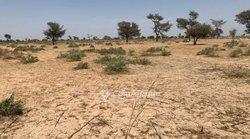 Terrain agricole  2,88 hectares - Keur Franck Fall