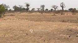 Terrain agricole  2,10 hectares - Sindia