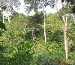 Terrain agricole 56 ha- Agboville