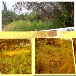 Vente Terrain agricole 60ha - Yocoboué