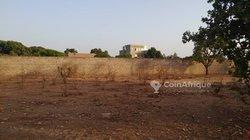 Vente Champ 4 hectares - Guerigne
