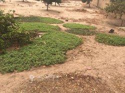 Vente Terrain agricole 7200 m² - Keur Moussa