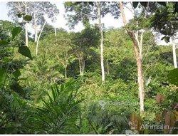 Terrain agricole 8 ha - Agboville