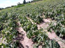Terrains agricoles 13 ha - Agbelouvé