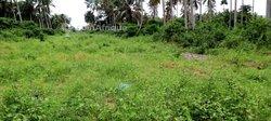 Terrains agricoles - Jacqueville