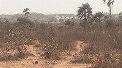 Terrain agricole 3 hectares - Diass