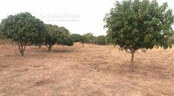 Verger fruitier de 1,25 hectare à Tassette