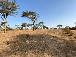 Vente Terrain agricole 1.8 ha - Thies