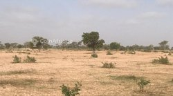 Terrains agricoles 70516 m2 - Thiès