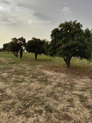 Vente Terrain agricole - Mewane