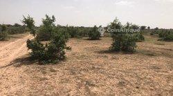 Terrain agricole 50 hectares - Koul